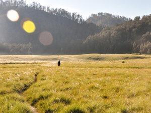 "OPEN TRIP Pendakian Gunung Argopuro 2021 ""Menyusuri Trek Terpanjang di Jawa"""